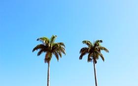 Картинка лето, небо, листья, деревья, ветки, пальмы, голубое