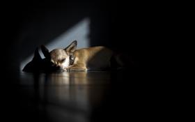 Обои тень, дом, собака