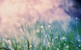 Обои трава, капли, роса, дым, grass, drop