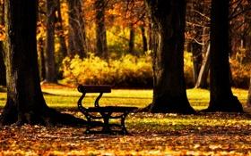 Обои autumn, скамья, деревья, фон, настроения, широкоформатные, лавка