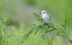 Обои птица, фон, трава