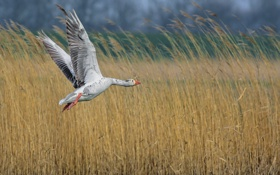 Обои природа, птица, полёт