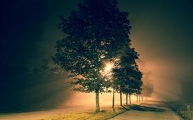 Картинка деревья, ночь, город, улица