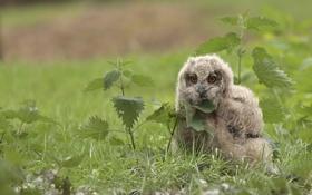 Картинка трава, птенец, филин