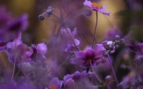 Обои природа, сиреневые, цветы, макро, боке