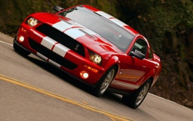 Обои shelby, ford mustang, gt500