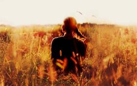 Картинка поле, лето, свет, настроение, колосья