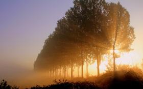 Обои свет, деревья, утро