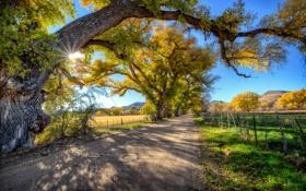 Обои дорога, деревья, горы, поля, США, лучи солнца, Arizona