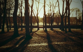 Обои красивые картинки для рабочего стола, обои, деревья, фото, природа, парк, дерево