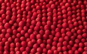Обои макро, малина, еда, ягода, много