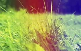 Обои трава, градиент, листики, солнечное настроение