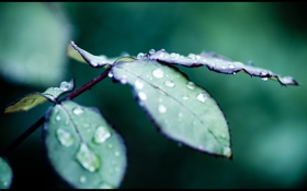 Картинка лето, капли, макро, лист, роса, воды, влажность