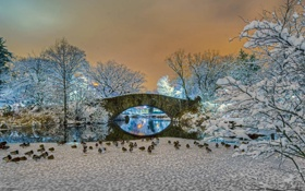 Обои зима, снег, деревья, пейзаж, мост, утки, Нью-Йорк