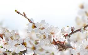 Обои весна, цветочки, цветение, веточки
