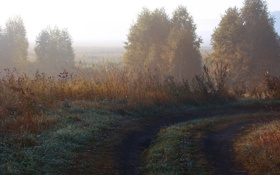 Картинка трава, фото, поле, обои, кусты, деревья, природа