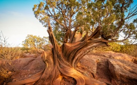 Обои небо, корни, камни, дерево, скалы