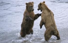 Обои вода, снег, медведи, парочка