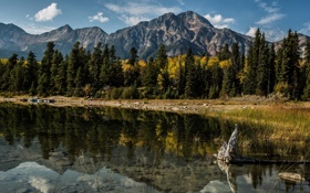 Обои деревья, горы, озеро, отражение, Канада, Альберта, Alberta
