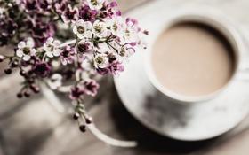 Картинка цветы, кофе, лепестки, кружка, чашка