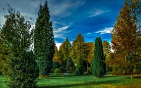 Обои осень, трава, листья, деревья, парк, обработка, Германия