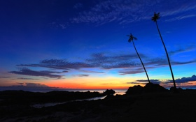 Обои море, небо, облака, ночь, камни, пальмы, скалы