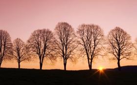 Картинка деревья, пейзаж, закат, природа, тень, вечер