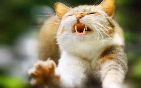 Картинка кот, лапы, кошак, рыжий