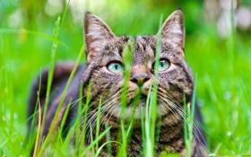 Обои кот, морда, трава, размытость