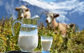 Картинка горы, стакан, коровы, молоко, кувшин