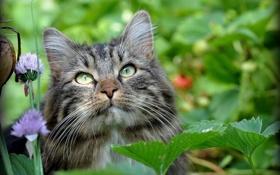 Обои кот, взгляд, природа