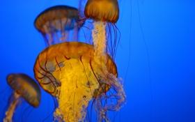 Обои море, медузы, под водой, много