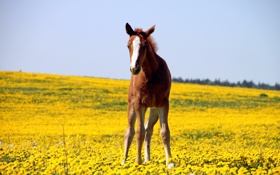 Картинка Природа, Поле, Лошадь