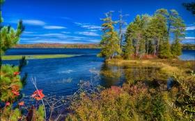 Картинка США, осень, озеро, деревья, штат Нью-Йорк
