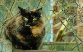 Обои кошка, взгляд, ветки, забор, разноцветная