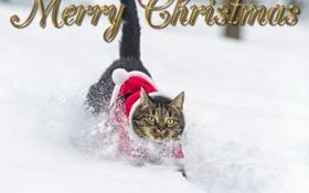 Картинка зима, кот, снег, костюм
