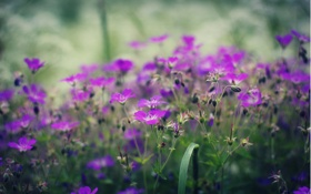 Обои поляна, зелень, полевые, цветы