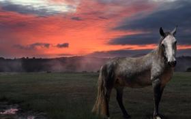Картинка лето, закат, природа, конь