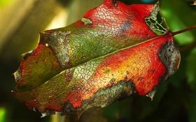 Картинка цвета, лист, текстура