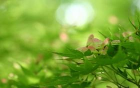 Обои природа, листья, зелень, ветка, дерево