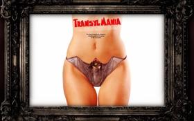 Обои фильм, обои, transylmania-bat-bikini
