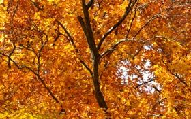 Обои листья, дерево, ветви, рыжие, осенние, кусочек неба
