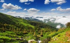 Обои распадок, холмы, облака, лес
