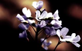 Обои цветы, темный фон, лепестки, цветение, flower, beautiful