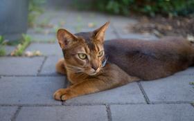 Картинка кот, кошак, лежит, котяра