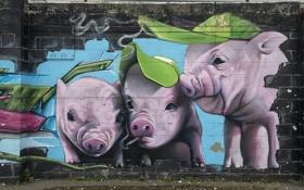 Обои город, стена, графити