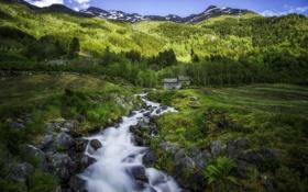 Картинка зелень, лес, лето, трава, деревья, горы, ручей