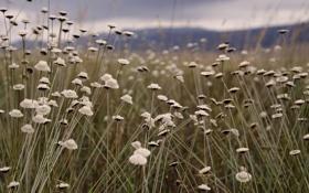 Обои поле, трава, растения, цаеты