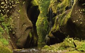 Обои лес, река, ручей, камни, скалы, ущелье