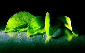 Картинка листья, капли, отражения, брызги, зеленые листья